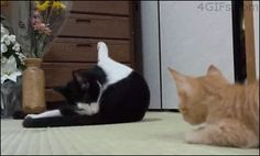 4gifs:  Boop. [video]