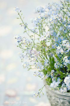 dyingofcute:    Forget-me-not Love