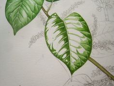 Lizzie Harper watercolour step 3 in painting a leaf