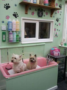 QPS DOG BATH - AS SEEN ON TV - PLASTIC PROFESSIONAL GROOMING GROOMER in Pet Supplies, Dog Supplies, Grooming   eBay