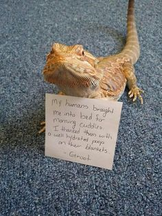 These Cute Reptiles Should Really Be Ashamed Of Themselves - World's largest collection of cat memes and other animals Bearded Dragon Funny, Bearded Dragon Habitat, Bearded Dragon Cage, Bearded Dragon Enclosure, Bearded Dragon Terrarium, Cute Reptiles, Reptiles And Amphibians, Cute Little Animals, Cute Funny Animals