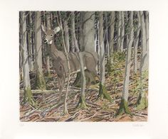 """""""Deer,"""" Neil G. Welliver, 1982, color etching on paper, 22 1/2 x 26 1/16"""", Pennsylvania Academy of the Fine Arts."""