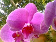 Minha orquídea.