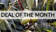 Deal of the Month - Pecan Starter Pack