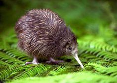 New Zealand Holidays - Luxury Holidays in New Zealand   Audley Travel   Audley Travel