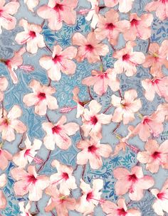Shabby Chic Hibiscus Patchwork Pattern in Pink & Blue Art Print by Micklyn | Society6