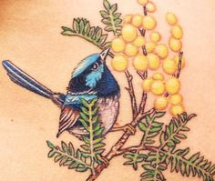 Blue fairy wren on golden wattle (Acacia decurrens) from Tatu Lu, Mullumbimby, AUSTRALIA Weird Tattoos, Love Tattoos, Beautiful Tattoos, Body Art Tattoos, Tatoos, Tattoo Art, Australian Wildflowers, Australian Native Flowers, Australian Birds