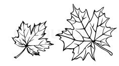 maple leaf silhouette - Google Search