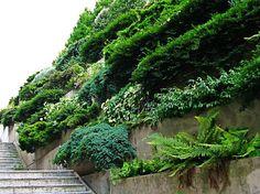 Jardines verdes: a mayor gloria de las perennes (2ª parte)
