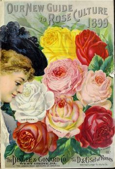 1899 - Our new guide to rose culture : - Biodiversity Heritage Library. http://biodiversitylibrary.org/page/43875031. #BHLinbloom