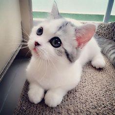Tiny kitty. ❤️❤️❤️ those eyes!!!! ❤️❤️❤️ kitties!!!!!: