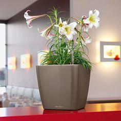 ruukku – Google-haku Cool Plants, Potted Plants, Self Watering Plants, Raised Flower Beds, Drain Plugs, Plastic Resin, Resin Material, Water Flowers, Plant Growth