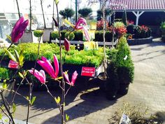 Tuinplantenafdeling