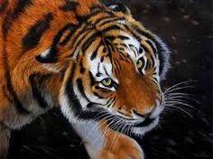 jason morgan peintre animalier - Recherche Google