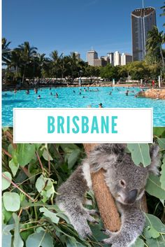 Brisbane, Australia: Insider tips from a local. The best time to travel there, hotels, restaurants and sights.