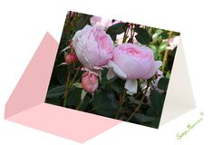 Rosenkarte ohne Text. Die Rosenkarte ist ohne Text und eignet sich für verschiedene Anlässe. Gift Wrapping, Plants, Gifts, Joie De Vivre, Valantine Day, Gift Wrapping Paper, Presents, Wrapping Gifts, Gift Packaging