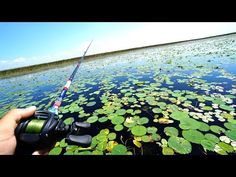 springtime bed fishing for monster bass (big bass) - YouTube
