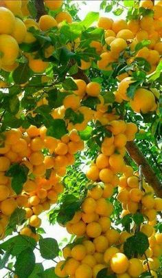 in paradise Fruit Plants, Fruit Garden, Fruit Trees, Fruit And Veg, Fruits And Vegetables, Fresh Fruit, Colorful Fruit, Tropical Fruits, Photo Fruit