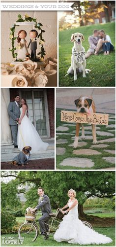 Including your dog on your wedding day, tips and ideas, Wouldn't it be Lovely