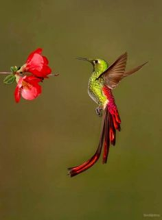 hummingbirds are so cool