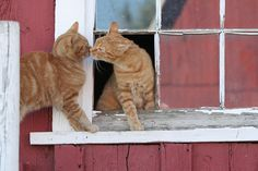 Two Barn Cats Greeting Each Other in Their Own Way.