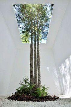 Que belleza.adaptar la casa a este hermoso árbol../..♥