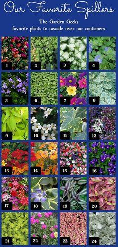 1. Purslane,  2. String of Pearls,  3. Deadnettle,  4. Dwarf Morning Glory,  5. Fan Flower,  6. Pilea,  7. Calibrachoa,  8. Licorice Vine,  9. Sweet Potato Vine,  10. Bacopa,  11. Ivy,  12. Lobelia,  13. Nasturtium,  14. Nemesia,  15. Petunia,  16. Torenia,  17. Verbena,  18. Vinca,  19. Zebrina,  20. Alternanthera,  21. Creeping Jenny,  22. Moss Rose,  23. Sedum,  24. Dichondra.