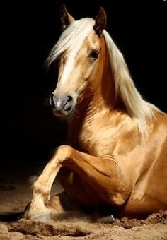 Golden Palamino Horse. Love that glossy coat!