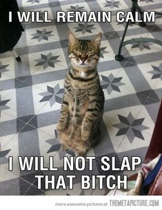 Anger management cat