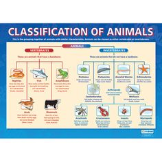 Classification of Animals Poster