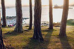 {www.neyoka.com} Photographs, Plants, Portraits, Photos, Plant, Planets