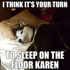 Funny Husky Meme Funny Husky Quote The post ap - Funny Dog Quotes - Funny Husky Meme Funny Husky Quote The post appeared first on Gag Dad. The post Funny Husky Meme Funny Husky Quote The post ap appeared first on Gag Dad. Husky Humor, Husky Quotes, Funny Husky Meme, Dog Quotes Funny, Funny Animal Memes, Funny Animal Pictures, Funny Dogs, Funny Animals, Laugh Quotes