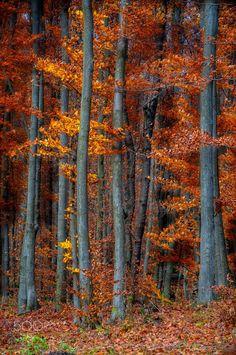 Dancing trees - null