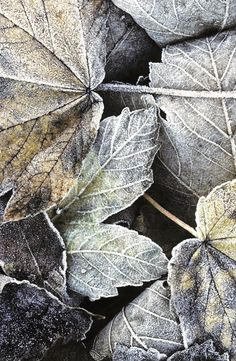 Cottage Charm - shades of grey - Autumn Leaves Wabi Sabi, Autumn Leaves, Autumn Fall, Plant Leaves, Seasons, Green, Flowers, Pictures, Photos