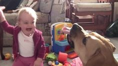 Babies are overcome with laughter at dogs playing with bubbles in this cute compilation of video clips.