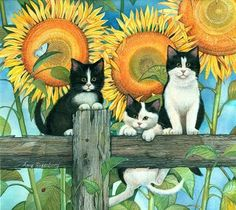 Amy Rosenberg, cats on fence with sunflowers