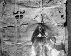 Photographer Olivia Parker - Original Photographs Photography Classes, Photography Women, Fine Art Photography, Photography Ideas, Olivia Parker, Imogen Cunningham, Still Life Photographers, Ansel Adams, Natural Forms