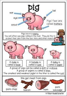 This pig themed pack is great to go with a farm theme scheme of work.  It is a collection of worksheets and activities.  Included in this pack Poster Printables linked to the poster Comprehension, spelling words, parts of speech worksheets, mathematics wo
