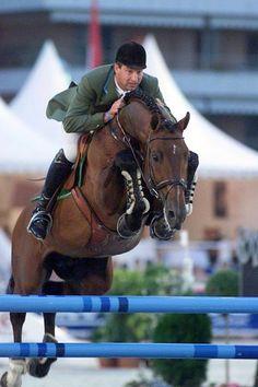 Lord Z 「Lord x Thia」 Holsteiner Stallion