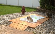 20 idees de cadeaux originaux pour chien piscine   20 idées de cadeaux originaux pour chien   terrasse piscine photo parapluie niche mobilie...