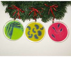 For the Science nerds among us - petri dish tree ornaments!
