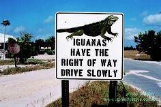Iguana sign. I LOVE THIS
