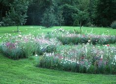 Paradise Garden, Dream Garden, Wild Flower Meadow, Wild Flowers, Beautiful World, Beautiful Gardens, How Plants Grow, Labyrinth Garden, Family Garden