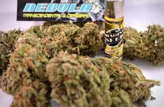 #Nebula, #starcloud was #bred in 1996, this variety received the name for its stellar qualities. Nebula has an open structure that is excellent for indoor farming where the #plants perform with optimal results in a #sea-of-green set-up. https://www.paradise-seeds.com/en/nebula.html