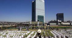 Hortas urbanas se multiplicam pelas grandes metrópoles