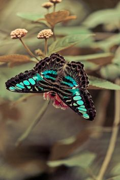 Beautiful butterfly Love Moments