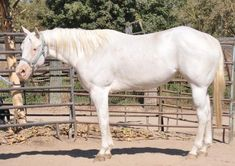 Ranch! Winchester Shotgun, Horses For Sale, Palomino, Animals, Ranch, Frame, Guest Ranch, Picture Frame, Animales