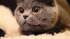 cutie http://ift.tt/2iHl7q0