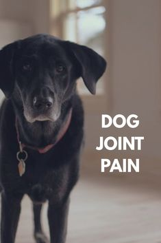 If your dog has joint pain or arthritis, get the low down here on the differences between Dasuquin vs cosequin for dogs. Learn what's best for your pup.
