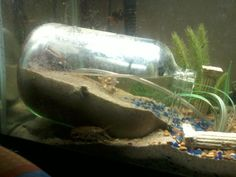 DIY: Making an under water dry zone for fiddler crabs on Instructables by infernisdiem ~ cute idea